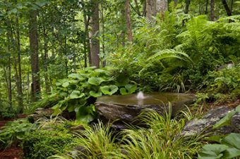 Water Features Near Me IMG - great landscaping ideas for either front or backyard designs
