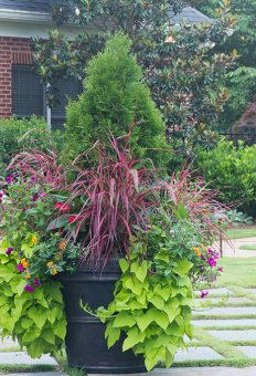 planters-and-pots-benefit-from-regular-attention-after-landscaping-companies-do-their-initial-install