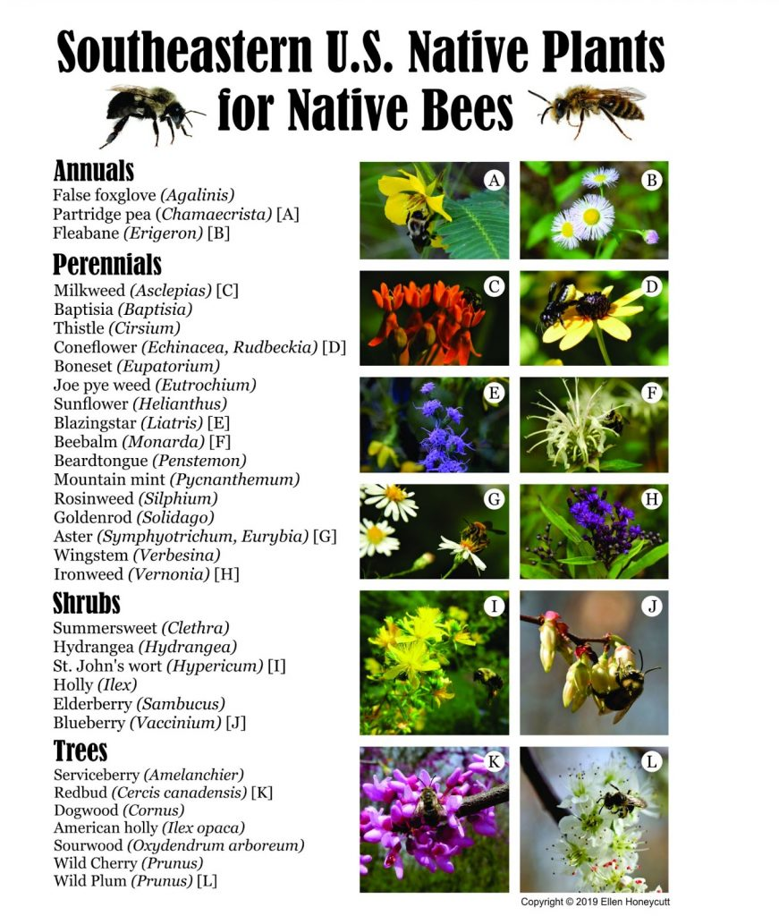landscape gardeners near me - Native Plants for Native Bees IMG