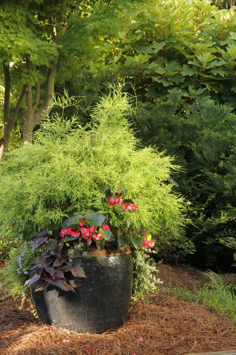 Residential Landscape Design Near Me - Residential Landscaping Container Gardening IMG
