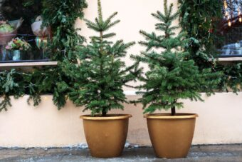 landscape design companies garden maintenance near me - Potted Outdoor Christmas Tree IMG