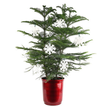 Top local landscaping company near me - Modern Garden Design Tabletop Christmas Tree IMG